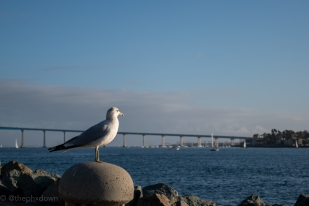 Seagull wonders what traffic is like on the way to Coronado.